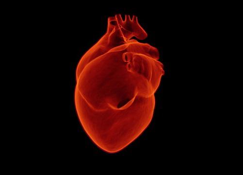 Otkrivena epigenetska osnova hipertrofije srca