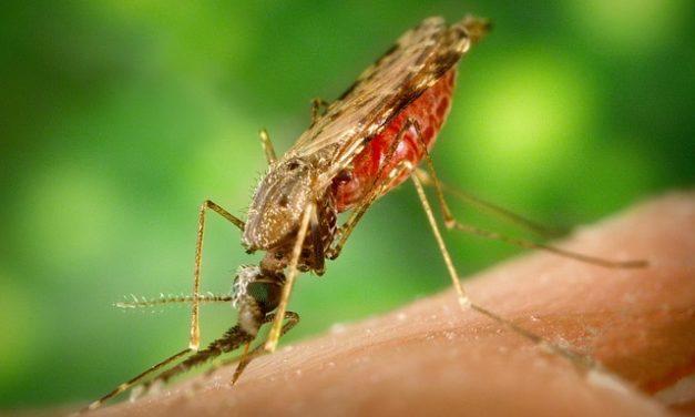 Bolesti koje prenose krpelji i komarci (Vektorske zarazne bolesti)