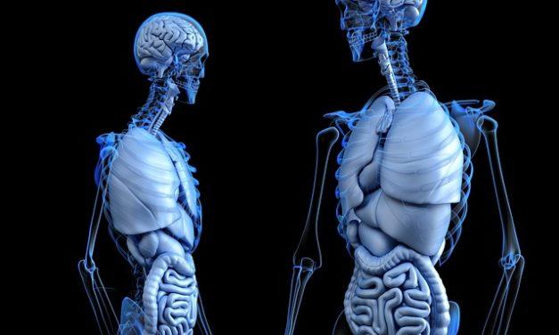 Specifični kolageni peptidi poboljšavaju mineralnu gustinu kostiju i markere kostiju kod postmenopauzalnih žena